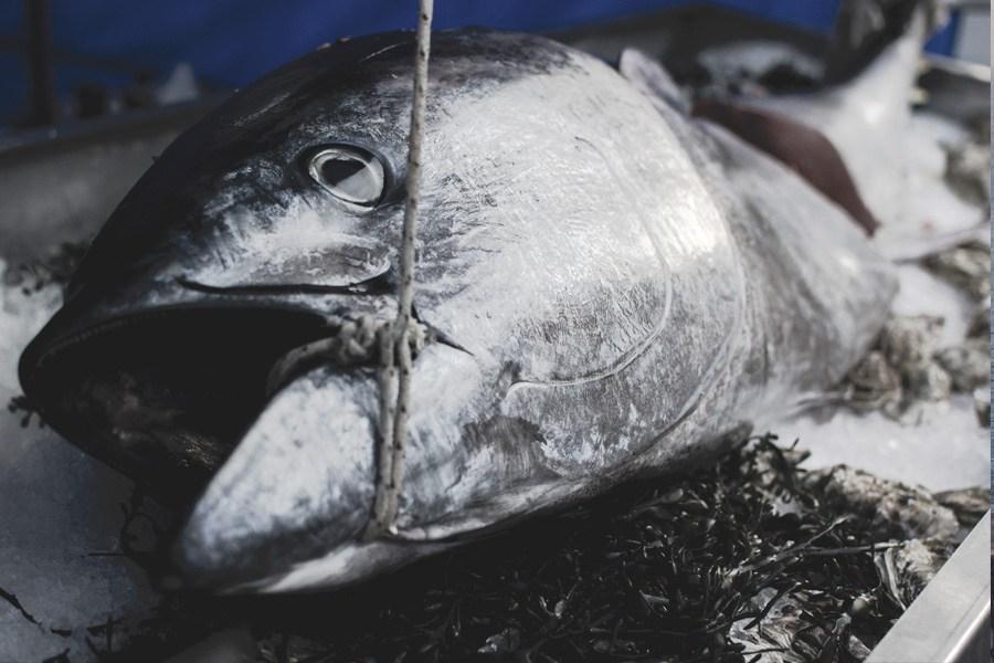 Om fiskerestauranten